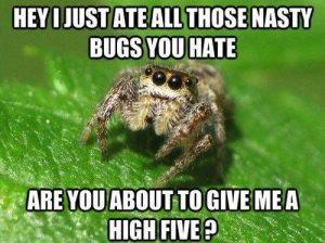 misunderstrood spider meme